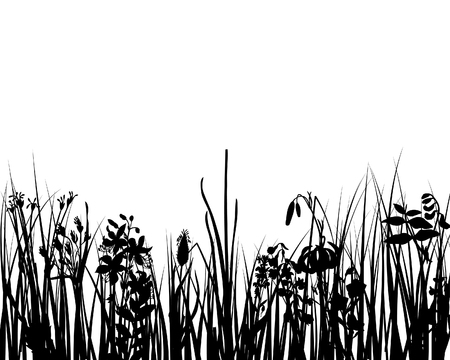Vector grass silhouettes background for design use Stock Vector - 4875013