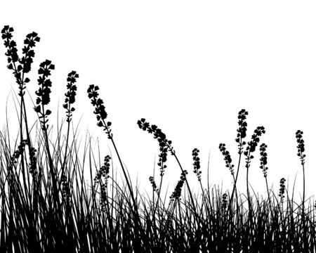 Vector grass silhouettes background for design use Stock Vector - 4875018