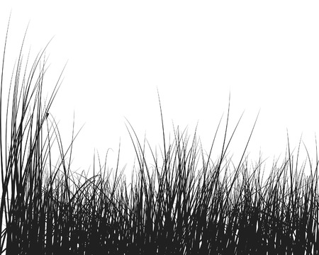 Vector grass silhouettes background for design use Illustration