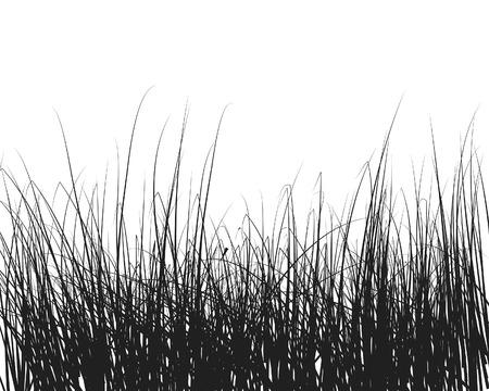 uncultivated: Vector illustration grass background for design use Illustration