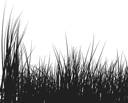 illustration herbe: Vector herbe illustration de fond pour utiliser la conception Illustration