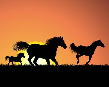 galop: Horse silhouette sur fond coucher de soleil. Vector illustration.