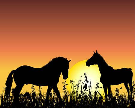 Silueta de caballo sobre fondo puesta del sol. Ilustración vectorial.