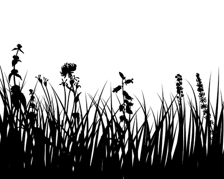 fertility: Vector grass silhouettes background for design use Illustration