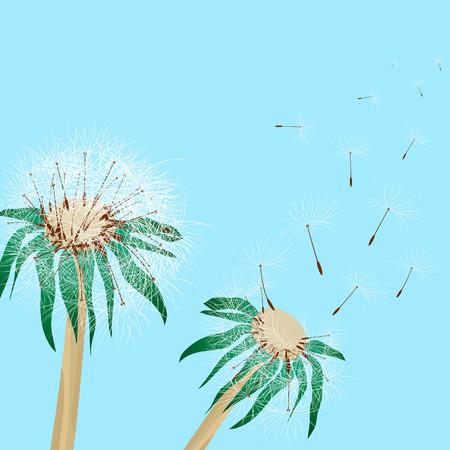 Pair of two beautiful dandelions. Vector illustration. Vector
