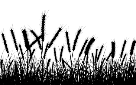 wheat illustration: Wheat and gras background. All objects are separated.