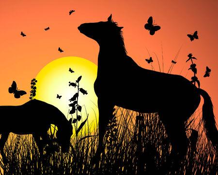 Horse silhouette on sunset background. Vector illustration. Stock Vector - 5314493
