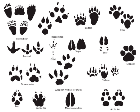 Biggest collection of animal and bird trails with title