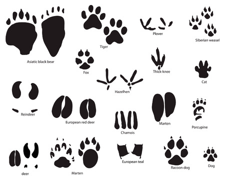Biggest collection of animal and bird trails with title Vector
