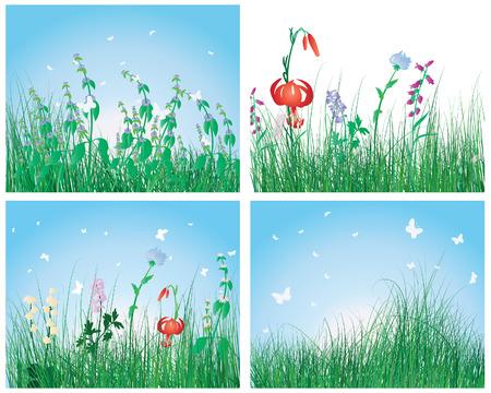 uncultivated: Vector illustration grass backgrounds set for design use