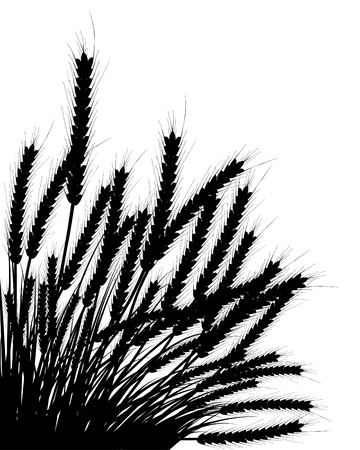 Wheat and grass background. All objects are separated. Vector