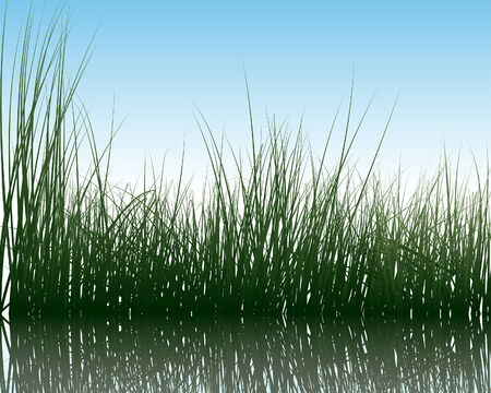 Vector grass silhouettes background with reflection in water. All objects are separated. Stock Vector - 5436603