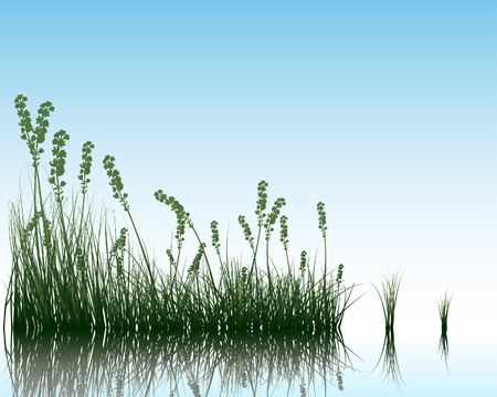 Vector grass silhouettes background with reflection in water. All objects are separated. Stock Vector - 5436612