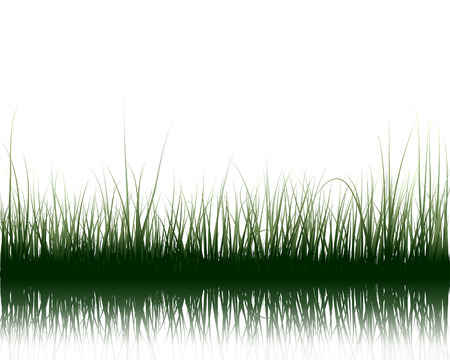 Vector grass silhouettes background with reflection in water. All objects are separated. Stock Vector - 5436602