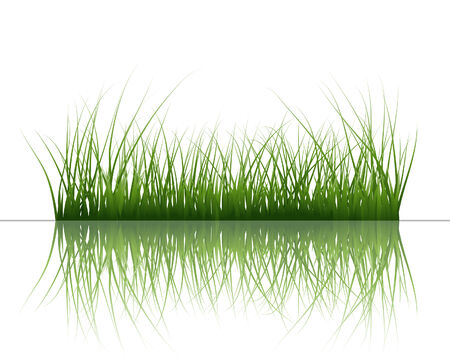 Vector grass silhouettes background with reflection in water. All objects are separated. Stock Vector - 5495402
