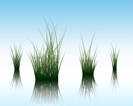 Vector grass silhouettes background with reflection in water. All objects are separated. Stock Vector - 5495390
