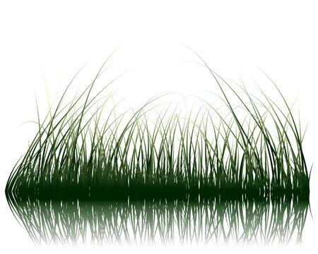 Vector grass silhouettes background with reflection in water. All objects are separated. Vector