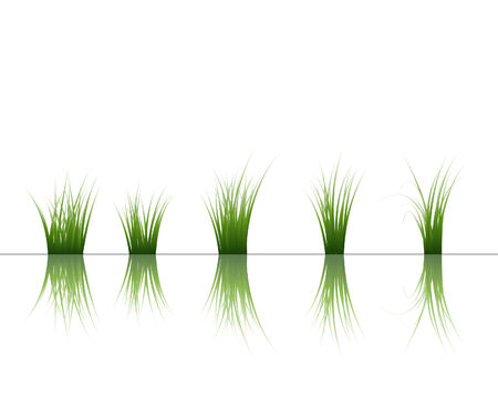 Vector grass silhouettes background with reflection in water. All objects are separated. Stock Vector - 5495387