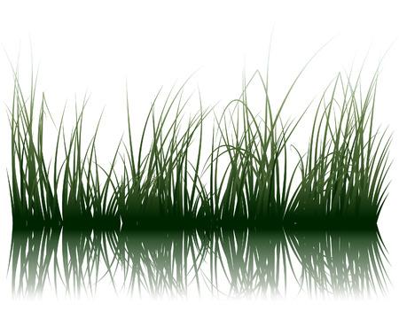 水の反射ベクトル草シルエット背景。すべてのオブジェクトが区切られます。  イラスト・ベクター素材