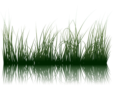 plants: Vector grass silhouettes background with reflection in water. All objects are separated.