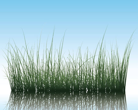Vector grass silhouettes background with reflection in water. All objects are separated. Stock Vector - 5560048