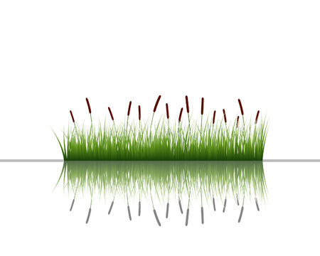 Vector grass silhouettes background with reflection in water. All objects are separated. Stock Vector - 5603188