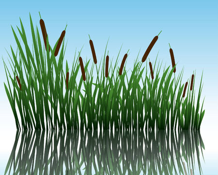 Vector grass silhouettes background with reflection in water. All objects are separated. Stock Vector - 5603184