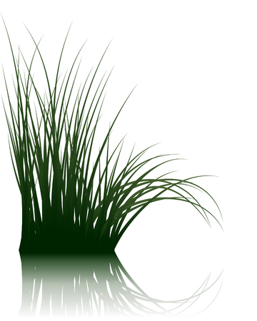 Vector grass silhouettes background with reflection in water. All objects are separated. Stock Vector - 5603179