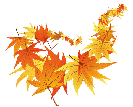Twisted row of autumn  maples leaves. Vector illustration. Stock Vector - 5633097
