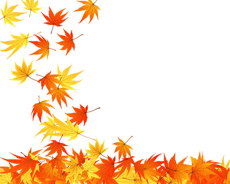 Twisted row of autumn  maples leaves. Vector illustration. Stock Vector - 5680546