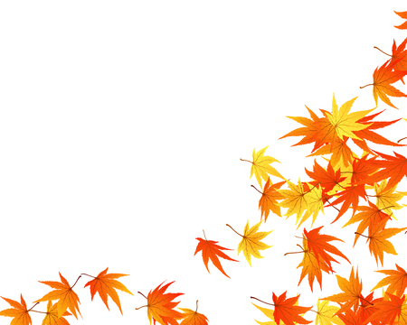 leaves vector: Twisted row of autumn  maples leaves. Vector illustration. Illustration