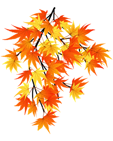 Twisted row of autumn  maples leaves. Vector illustration. Stock Vector - 5680542