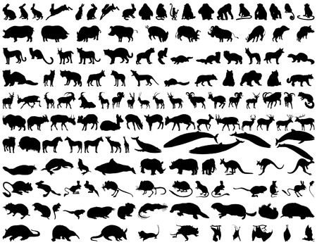 silhouettes elephants: Gran colecci�n de diferentes animales ilustraci�n vectorial Vectores