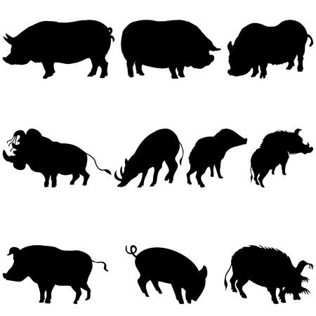 outlined isolated: Colecci�n de los cerdos y los jabal�es siluetas. Ilustraci�n del vector.
