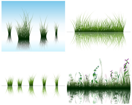 Vector grass silhouettes backgrounds set with reflection in water. All objects are separated. Stock Vector - 6312518