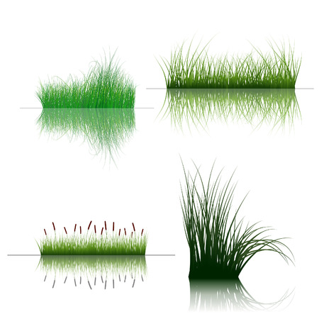 Vector grass silhouettes backgrounds set with reflection in water. All objects are separated. Stock Vector - 6330069