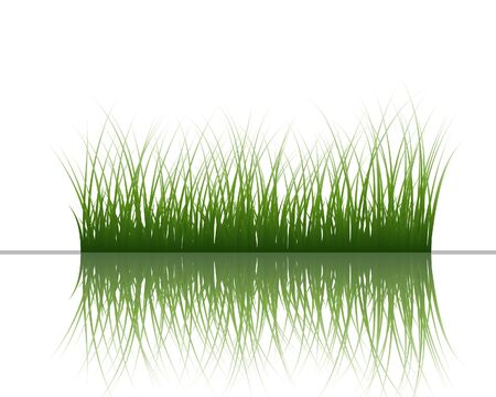 bog:  grass silhouettes background with reflection in water. All objects are separated. Illustration