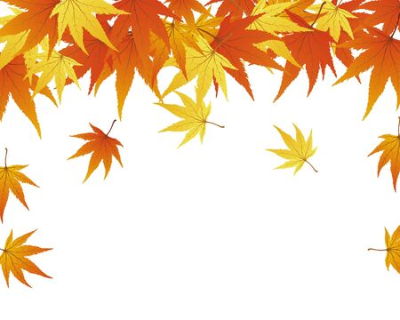 frames and borders: Pattern of autumn  maples leaves.  illustration.