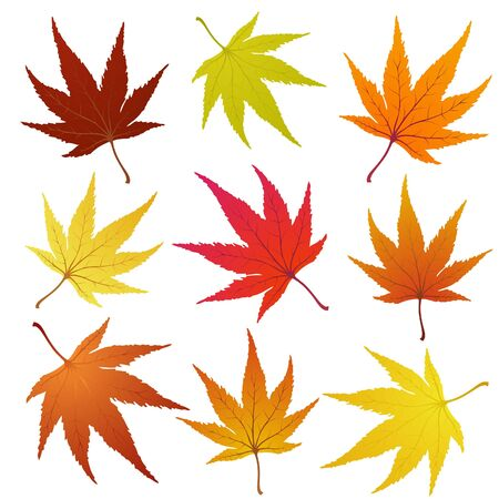 Set of of autumn  maples leaves.  illustration. Vector