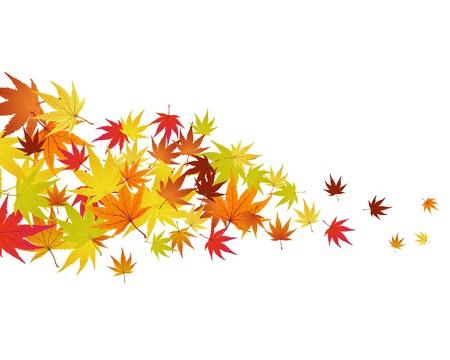 Pattern of autumn  maples leaves.   illustration. Stock Vector - 7763690