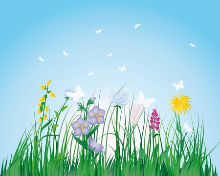 field of flowers: Vector grass silhouettes background. All objects are separated. Illustration