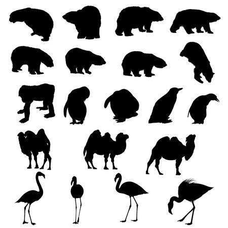 flamingi: Zestaw silhouettes niedźwiedzie, ape, Pingwiny, Wielbłądy i flamingos. Ilustracja wektora. Ilustracja