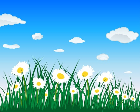 camomile: Meadow background with camomiles. All objects are separated. Vector illustration. Illustration