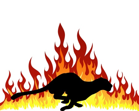 tongues of fire: Puma silhouette with flame tongues. Vector illustration.