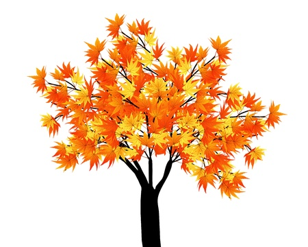 Pattern of autumn  maples leaves on tree. Vector illustration.