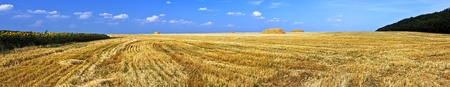 Field of ripe wheat just after harvesting photo