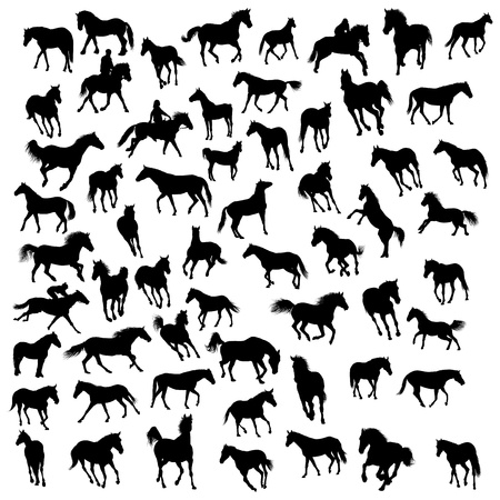 cowboy on horse: Big vector collection of different horses silhouettes Illustration