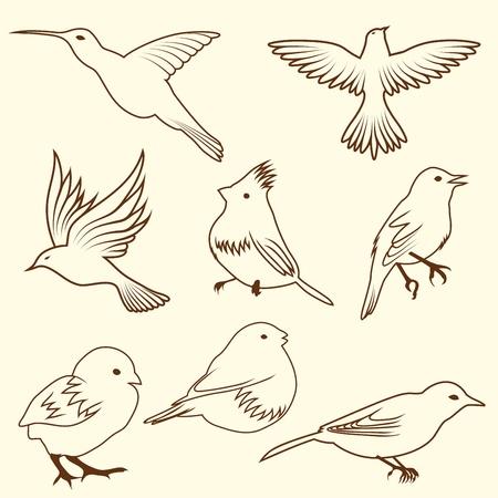 paloma caricatura: Conjunto de esbozo diferentes aves. ilustraci�n para uso de dise�o.