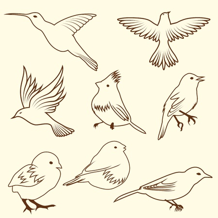 birds of paradise: Set of different sketch bird. illustration for design use.
