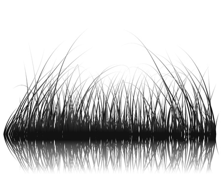 Vector grass silhouettes background with reflection in water. All objects are separated. Stock Vector - 12493056
